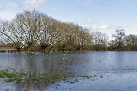 Photo for Flooded Farmland at Cricklade, Wiltshire  Home of the rare Snakes-head Fritillary - Royalty Free Image