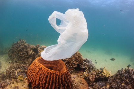 A torn plastic bag drifts over a tropical coral reef causing a hazard to marine life such as turtles