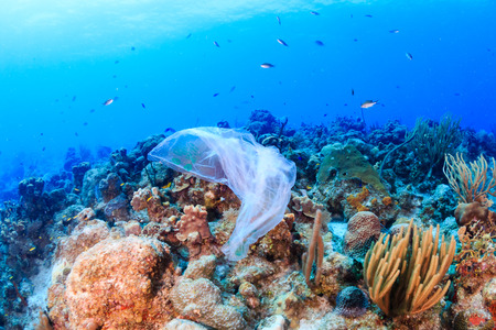 Plastic pollution:- a discarded plastic rubbish bags floats on a tropical coral reef presenting a hazard to marine life