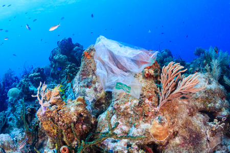 Plastic pollution:- a discarded plastic rubbish bag floats on a tropical coral reef presenting a hazard to marine life