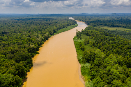Photo for Aerial drone view of a long, brown winding river through tropical rainforest (Kinabatangan River, Borneo) - Royalty Free Image