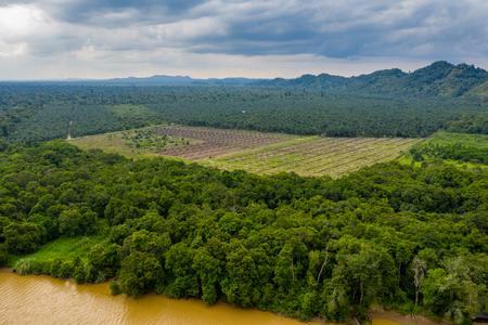 Foto de Aerial drone view of deforestation in a tropical rainforest to make way for palm oil plantations - Imagen libre de derechos