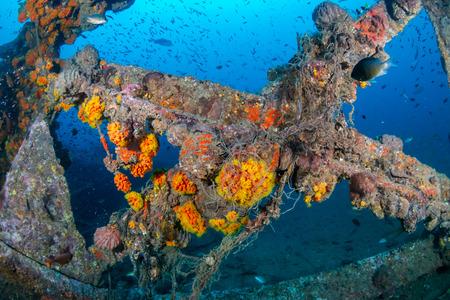Photo pour Schools of colorful tropical fish swarming around an old, broken underwater shipwreck - image libre de droit