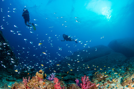 Foto de SCUBA divers swimming over a colorful tropical coral reef (Similan Islands) - Imagen libre de derechos