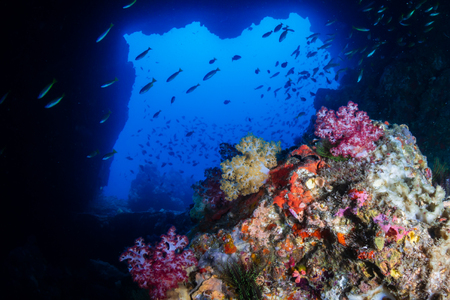 Photo pour An underwater archway on a tropical coral reef (Western Rocky, Myanmar) - image libre de droit