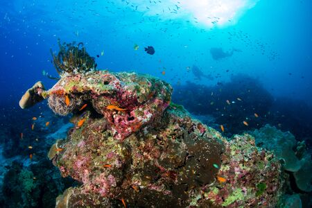 Photo pour Thriving, healthy tropical coral reef in Thailand's Similan Islands - image libre de droit