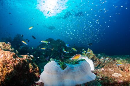 Photo pour SCUBA Divers on a colorful tropical coral reef in Thailand's Similan Islands - image libre de droit