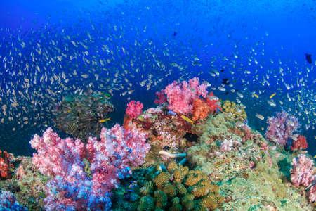 Photo pour Tropical fish around a bright, colorful tropical coral reef. - image libre de droit