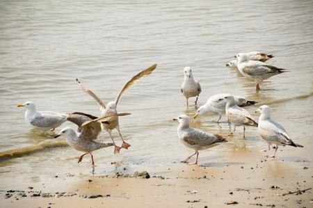 flock of seagulls wading on a sandy beach