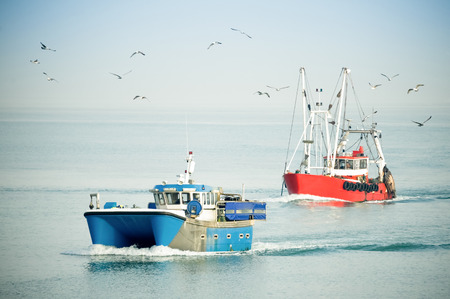 fishing trawlers returning to port on a hazy day surrounded by seagulls