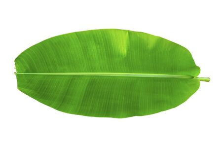 Photo pour One banana leaf on isolate and white background - image libre de droit