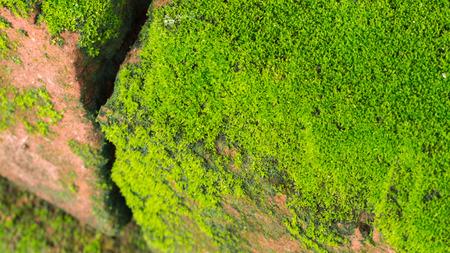 Moss Massively on The Bricks