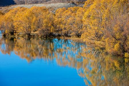Autumn trees around blue pond