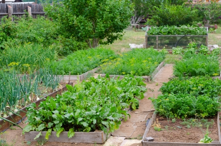 beds at kitchen garden with various vegetablesの写真素材