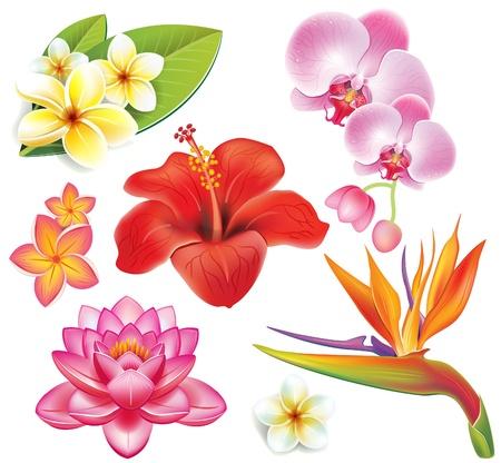 Illustration pour Set of tropical flower - image libre de droit