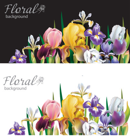 Banners with Iris flowers