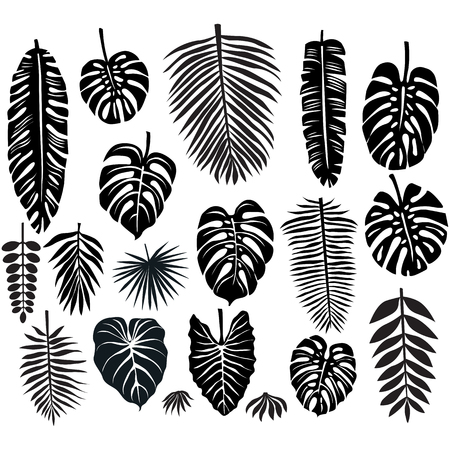 Illustration for Set of Tropical Leaves - Royalty Free Image