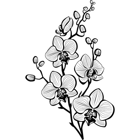 Illustration for Sketch of orchid flowers - Royalty Free Image