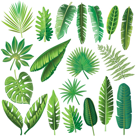 Illustration for Vector tropical leaves - Royalty Free Image
