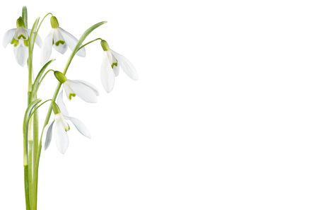 Spring snowdrop flowers corner set isolated on white