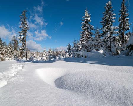 Photo pour Alpine mountain snowy winter fir forest with snowdrifts - image libre de droit