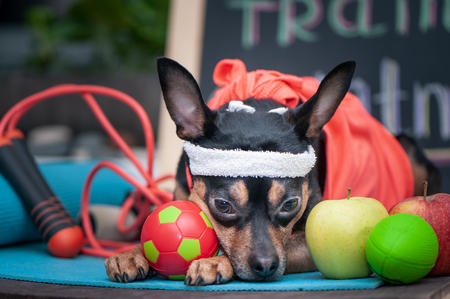 Tired dog after workout. Pet Fitness , sport and lifestyle concept. Fitness and Sports Motivation