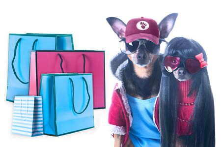 Stylish couple of fashionable dogs and shopping packages isolated, Shopping concept and sales