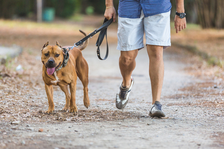 Foto de Man walking with his dog at park. Close up view on dog and on the legs of the man holding it on leash. - Imagen libre de derechos