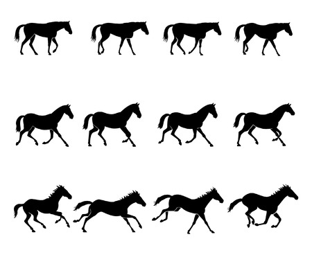 The three natural gaits of the horses. First row: WALK  Second row: TROT  Third row: GALLOP