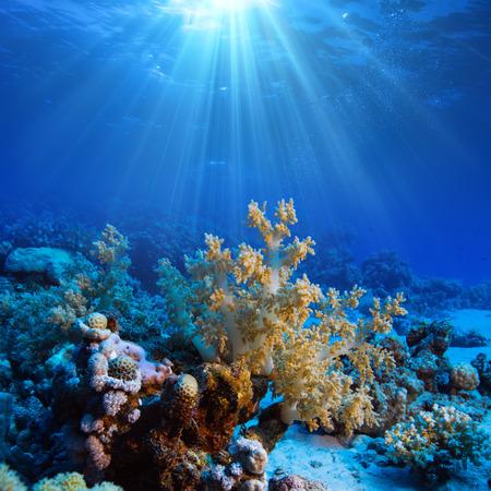Ocean underwater coral reef in open deep sea