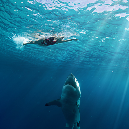 Photo pour Great White Shark attack swimmer - image libre de droit