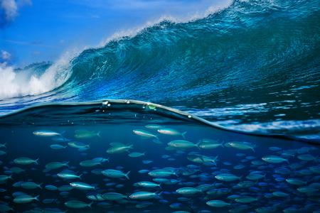 Photo pour Tropical fish under ocean wave in sea water - image libre de droit