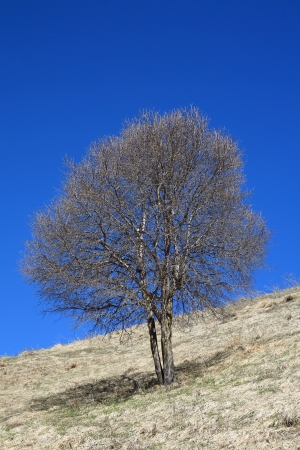 One tree in the mountains against the blue sky