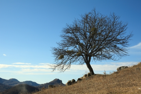 One tree in the late of autumn against the blue sky