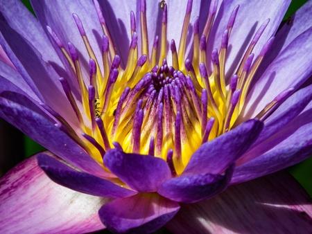 Beautiful naturally detailed of lotus flower