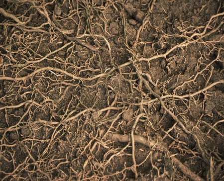close up roots with fertile soil background