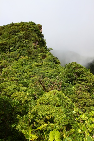 Cloudy rainforest peak in the highlands of Saint Kitts