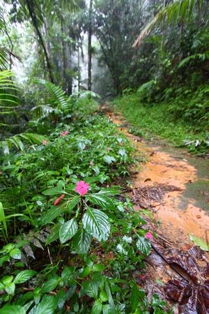 Path through the foggy Toro Negro Rainforest of Puerto Rico