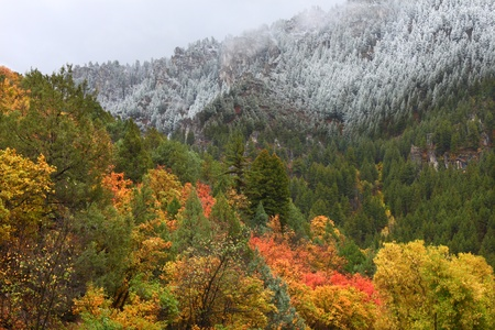 Snowfall blankets colorful autumn scenery at Cache National Forest of Utah