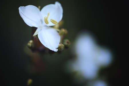 OSORNO, CHILE - Jun 28, 2020: flor que crece en medio de unos hermosos paisajes del sur de chile