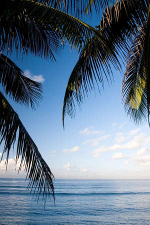 Foto de The beautiful scenery of a tropical beach with coconut leaves and blue sky background - Imagen libre de derechos