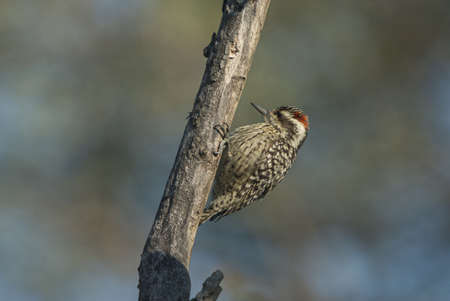 Photo pour A vertical closeup shot of a cute woodpecker on a wooden trunk with blurred background - image libre de droit