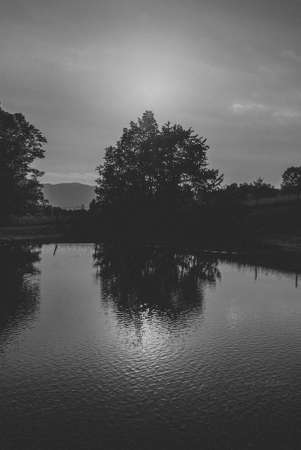 Photo for A black and white shot of a tree silhouette next to a pond - Royalty Free Image