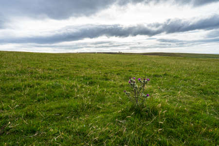 Foto de A dramatic shot of a plain with a purple flowers on a lone plant in the foreground, north of Scotland - Imagen libre de derechos