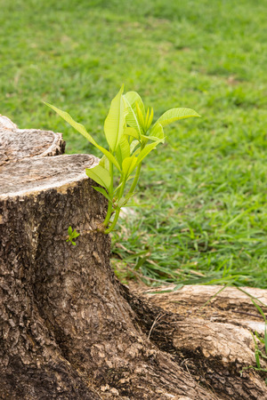 Small tree grow from stump concept for perseverance