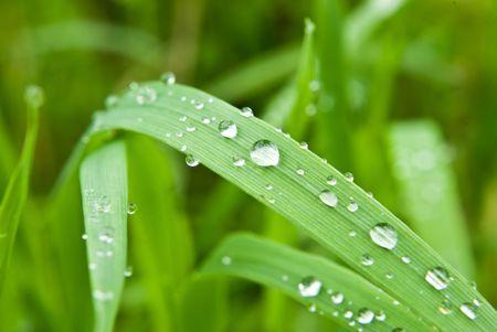 some dew drops on leaf