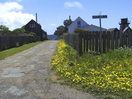Little Lake Street with sign... a quiet country road by the sea, lined with yellow flowers.