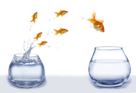 Foto de jump gold fish from aquarium to aquarium on white background - Imagen libre de derechos