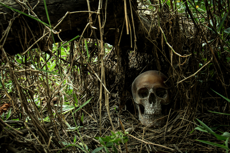 Still Life with a Skull in forest