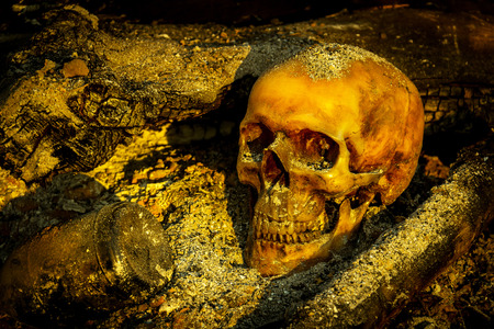 Still life with human skull on ashes and burned log in the forest